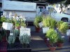 Plants at Framers Market, January 2001.